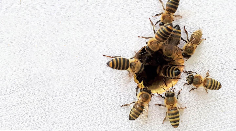 mi a méhek látványa)